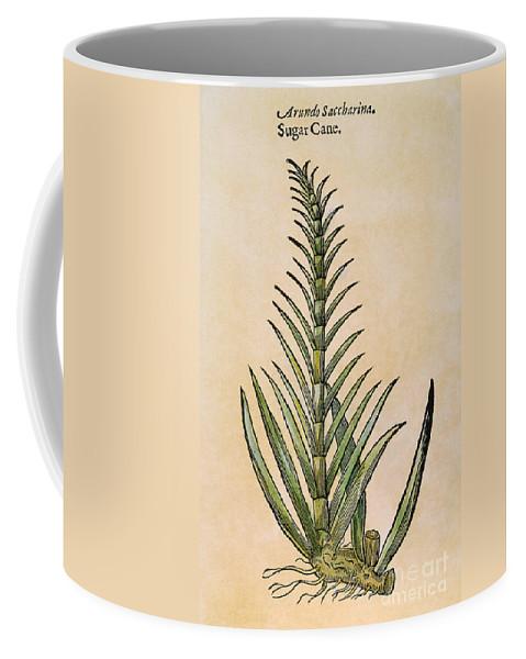 1597 Coffee Mug featuring the photograph Sugar Cane, 1597 by Granger