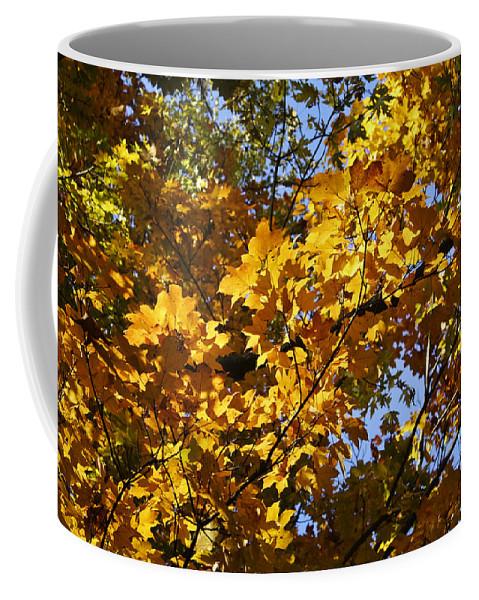 Sugar Coffee Mug featuring the photograph Sugar Maple by Teresa Mucha