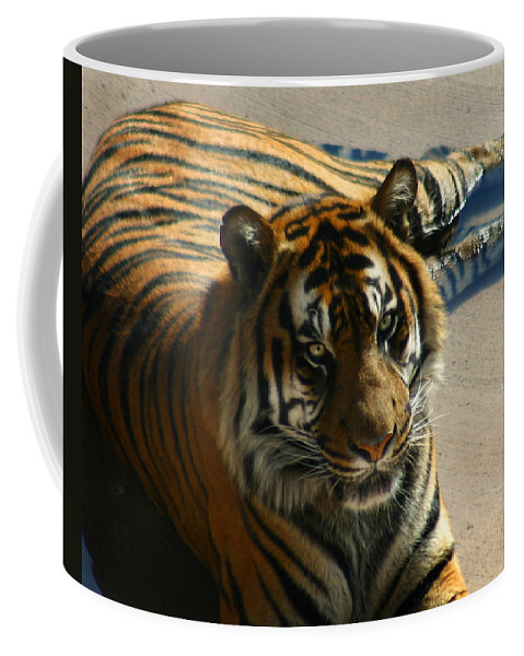 Tiger Coffee Mug featuring the photograph Sumatran Tiger by Anthony Jones