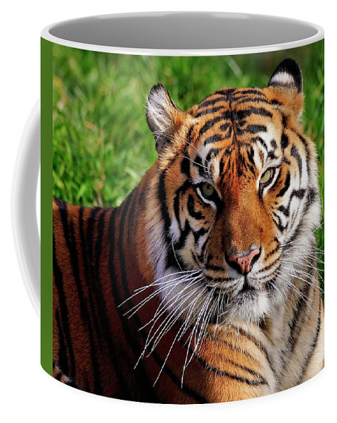 Sumatran Coffee Mug featuring the photograph Sumatran Tiger by Bill Dodsworth