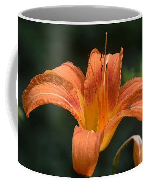 Flowers Coffee Mug featuring the photograph Summer Bloom-3 by Charles HALL