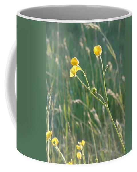 Flowers Coffee Mug featuring the photograph Summer Buttercups by Susan Baker