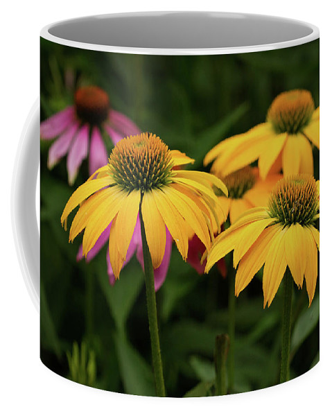Coneflower Coffee Mug featuring the photograph Summer Glory by Jayne Gulbrand
