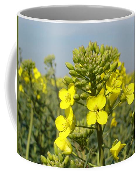 Summer Coffee Mug featuring the photograph Summer Gold by Susan Baker