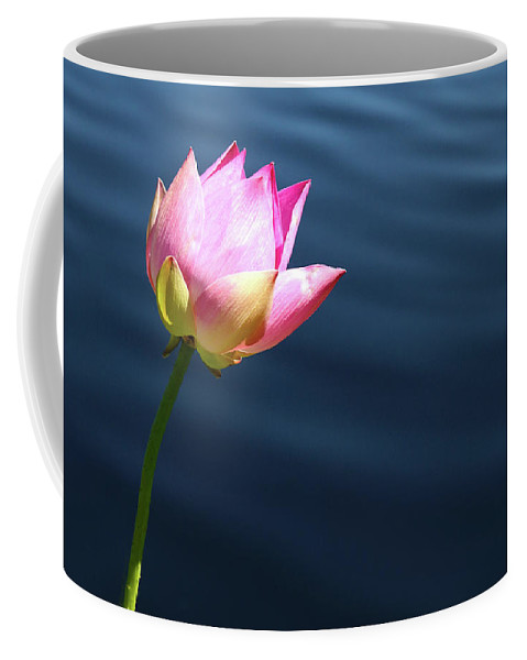 Pink Coffee Mug featuring the photograph Summer Lily by Marie Leslie