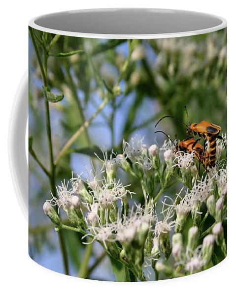 Beetle Coffee Mug featuring the photograph Summer Lovin by Kristin Elmquist