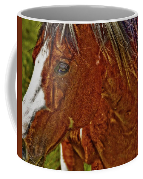 Brown Coffee Mug featuring the photograph Summer Mare by Amanda Smith