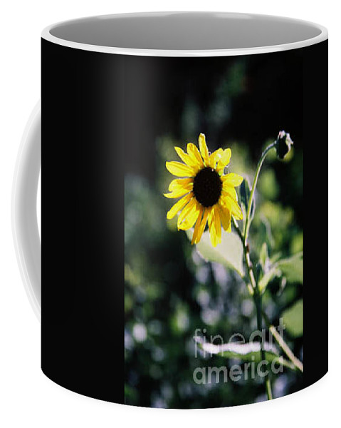 Sunflower Coffee Mug featuring the photograph Summer Sunshine by Kathy McClure