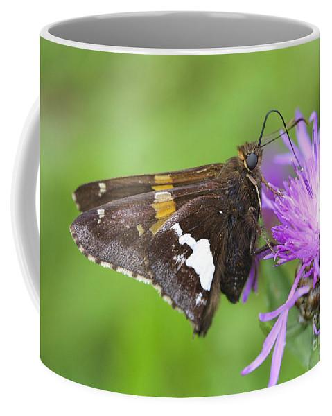 Flower Coffee Mug featuring the photograph Summer Sweets by Deborah Benoit