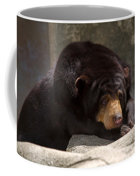 Animal Coffee Mug featuring the photograph Sun Bear by Louise Heusinkveld