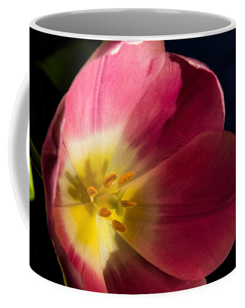 Nature Coffee Mug featuring the photograph Sun Greeting by Alana Thrower