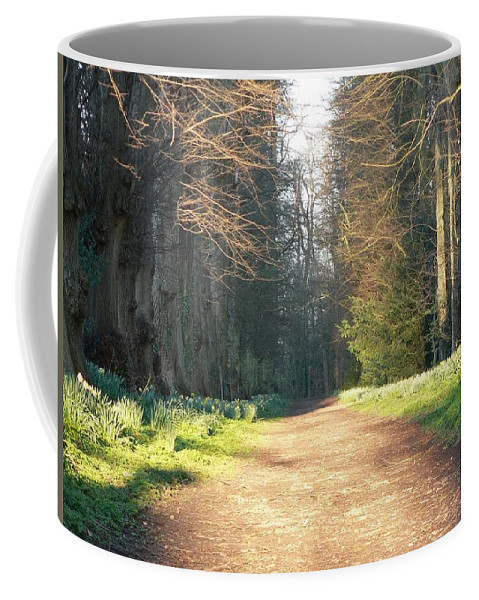 Avenue Of Trees Coffee Mug featuring the photograph Sun On The Avenue by Lynne Iddon