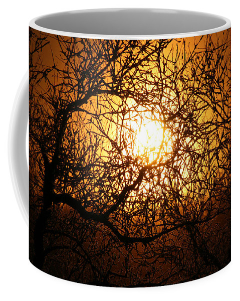 Sun Rise Trees Yellow Gold Plants Shine Colorful Bright Sky Coffee Mug featuring the photograph Sun Tree by Andrea Lawrence