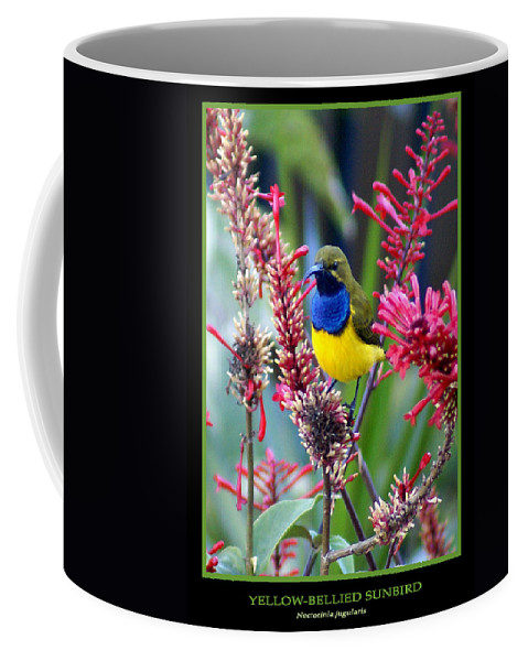 Animals Coffee Mug featuring the photograph Sunbird by Holly Kempe