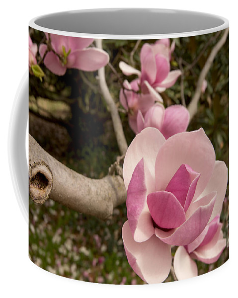 Magnolia Coffee Mug featuring the photograph Sundew 3990 by Terri Winkler