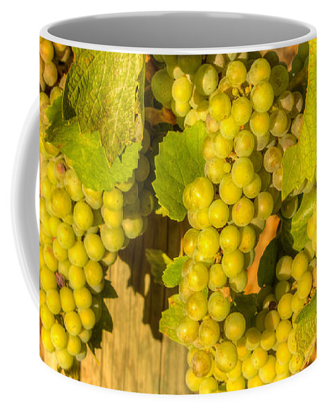 Grape Coffee Mug featuring the photograph Sundrenched 0044 by Kristina Rinell