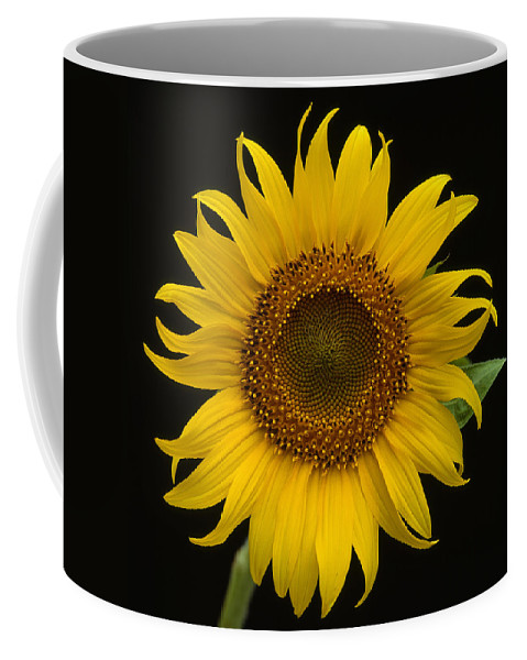 Sunflower Coffee Mug featuring the photograph Sunflower 1 by Bob Neiman
