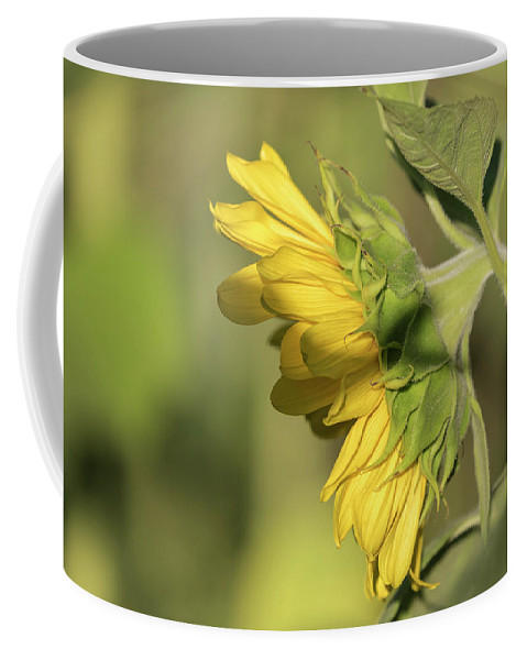 Sunflower Coffee Mug featuring the photograph Sunflower 2016-1 by Thomas Young
