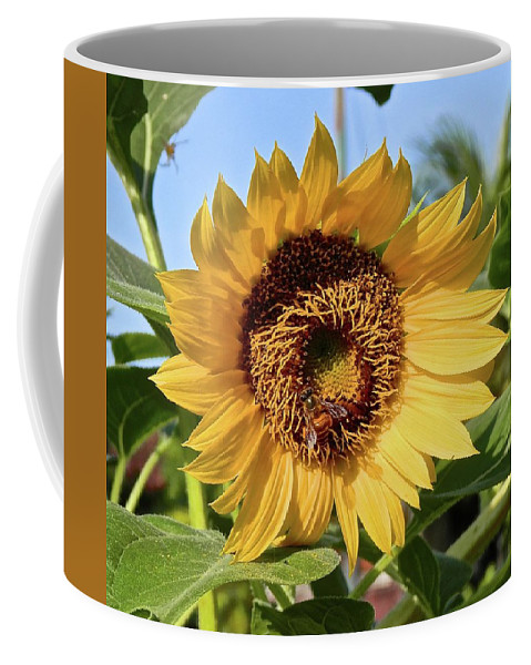 Sunflower Coffee Mug featuring the photograph Sunflower And Bee by Joe Wyman
