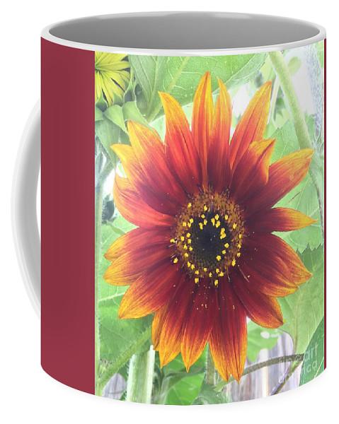 Sunflower Coffee Mug featuring the photograph Sunflower by Craig Sulser