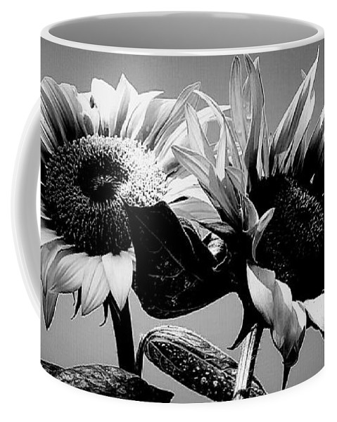 Black And White Coffee Mug featuring the photograph Sunflower Duo Bw by Alexis King-Glandon