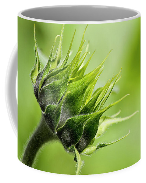 Sunflower Coffee Mug featuring the photograph Sunflower Essence by Christina Rollo