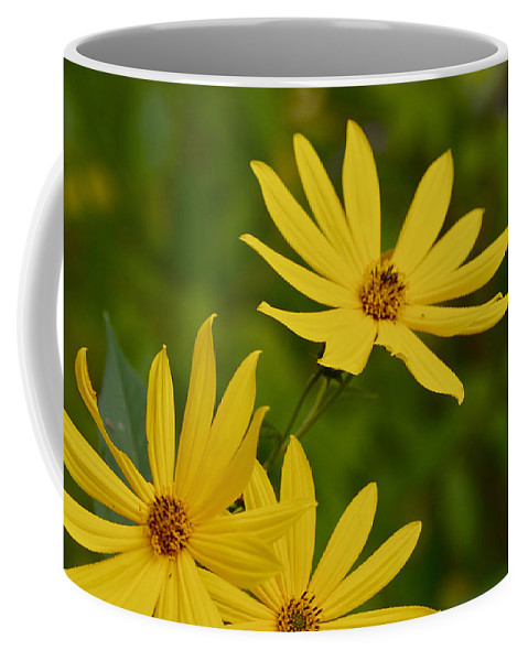 Beautiful Coffee Mug featuring the photograph Sunflower by Jack R Perry