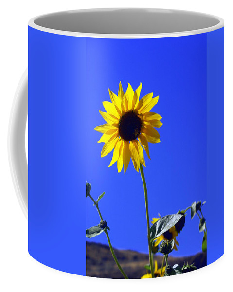 Flowers Coffee Mug featuring the photograph Sunflower by Marty Koch