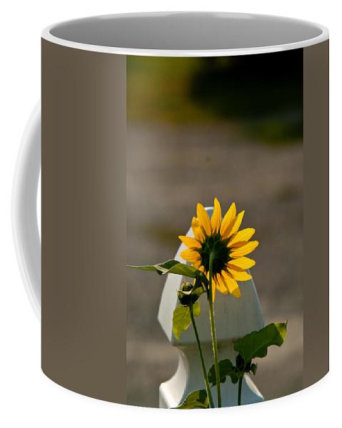 Sun Coffee Mug featuring the photograph Sunflower Morning by Douglas Barnett