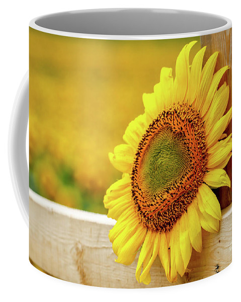 Sunflower Coffee Mug featuring the photograph Sunflower On The Fence by Eleanor Abramson