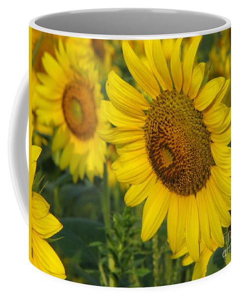 Sunflowers Coffee Mug featuring the photograph Sunflower series by Amanda Barcon