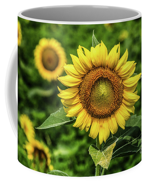 Beshers Coffee Mug featuring the photograph Sunflower  by Thomas Marchessault