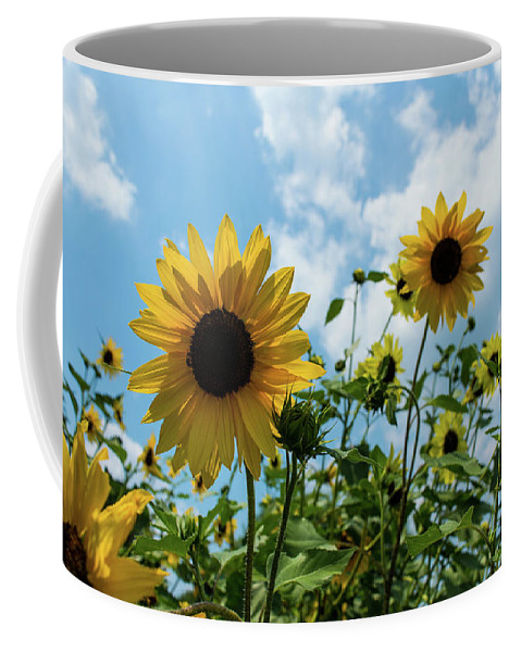 Sunflowers Coffee Mug featuring the photograph Sunflowers And The Bee by Nancy Comley