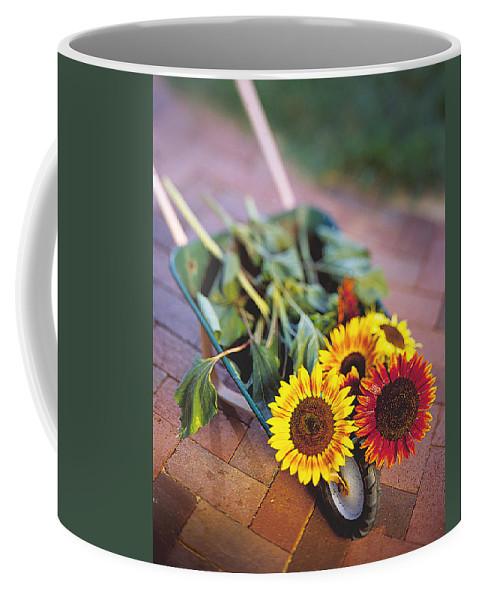 Sunflower Coffee Mug featuring the photograph Sunflowers by Robert Ponzoni