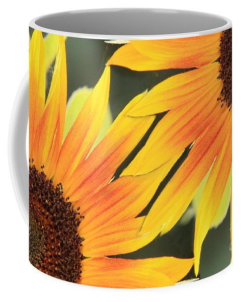Sunflowers Coffee Mug featuring the photograph Sunflowers Corners by James BO Insogna
