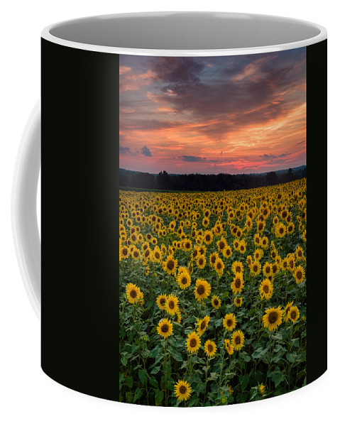 Buttonwood Farm Coffee Mug featuring the photograph Sunflowers To The Sky by Michael Blanchette