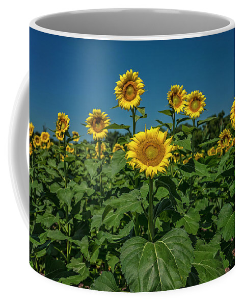 Landscape Coffee Mug featuring the photograph Sunflowers Weldon Spring Mo Ver1_dsc9821_16 by Greg Kluempers