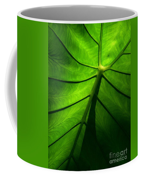 Green Coffee Mug featuring the photograph Sunglow Green Leaf by Patricia L Davidson