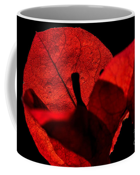 Photography Coffee Mug featuring the photograph Sunlight Behind The Petals by Kaye Menner