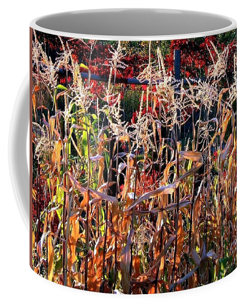 Fall Coffee Mug featuring the photograph Sunlit Fall Corn by Will Borden