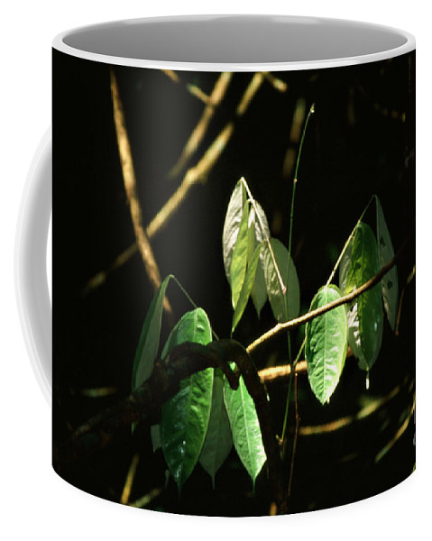 Leaves Coffee Mug featuring the photograph Sunlit Leaves by Kathy McClure