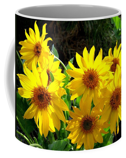 Wildflowers Coffee Mug featuring the photograph Sunlit Wild Sunflowers by Will Borden