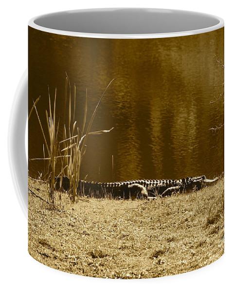 Gator Coffee Mug featuring the photograph Sunning Gator by Carol Groenen