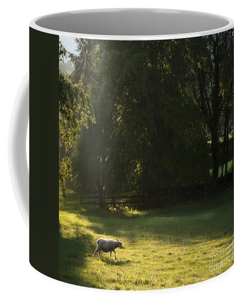 Sheep Coffee Mug featuring the photograph Sunny Evening by Angel Ciesniarska