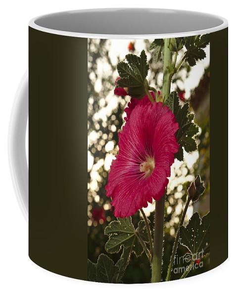 Mayflower Coffee Mug featuring the photograph Sunny Garden Mayflower by Angelo DeVal