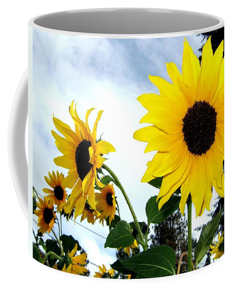 Sunflowers Coffee Mug featuring the photograph Sunny Slopes by Will Borden
