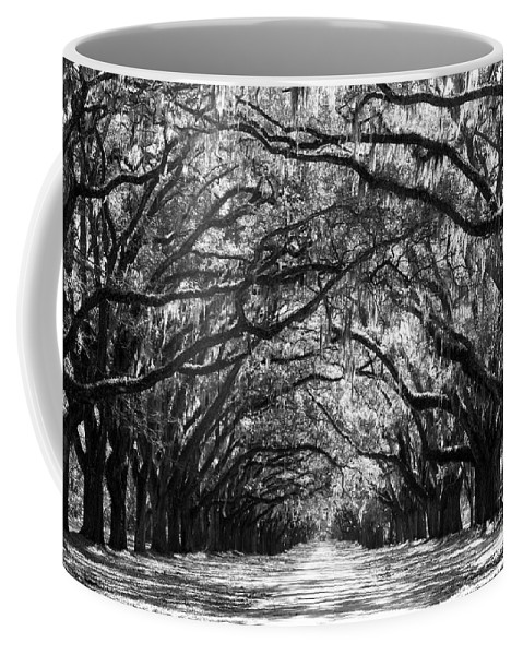 Live Oaks Coffee Mug featuring the photograph Sunny Southern Day - Black And White by Carol Groenen