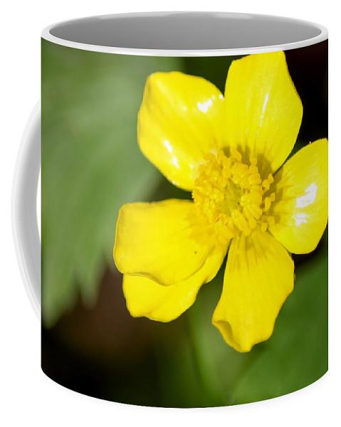 Sunny Yellow Cinquefoil Coffee Mug featuring the photograph Sunny Yellow Cinquefoil by Cynthia Woods
