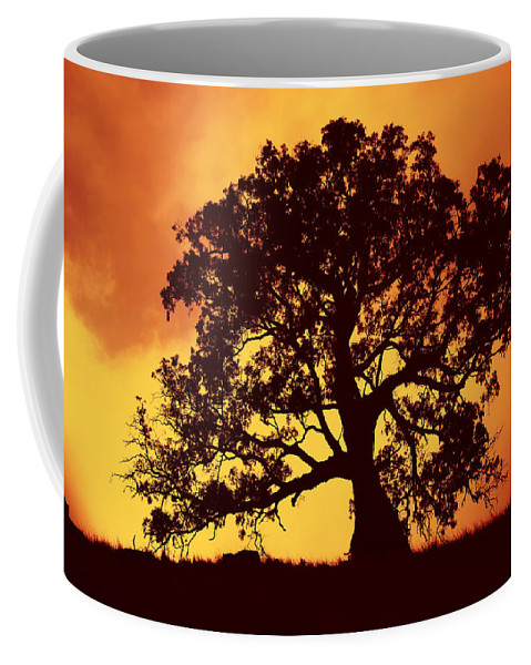 Gum Tree Coffee Mug featuring the photograph Sunrise Gum by Mike Dawson