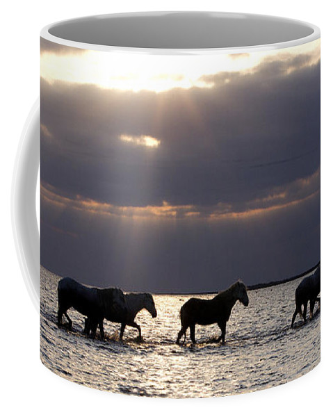 Horses Coffee Mug featuring the photograph Sunrise Horses by Carol Walker